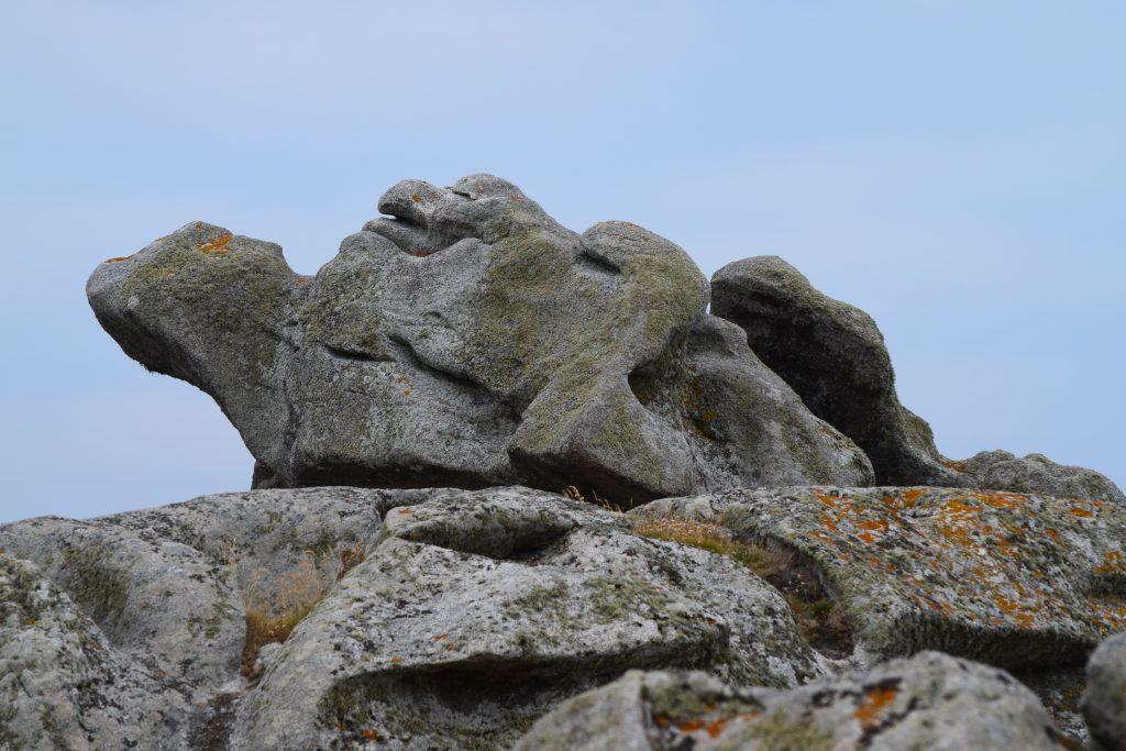 Allianz - Schildkröte und Fels