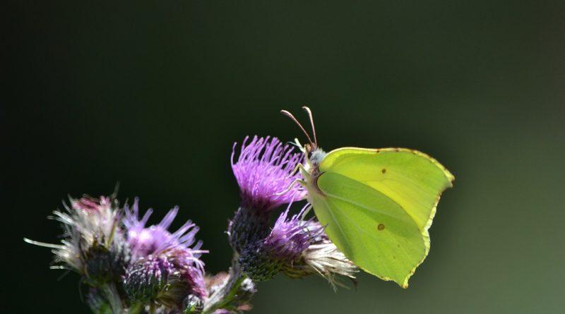 Schmetterlinge und Frühling