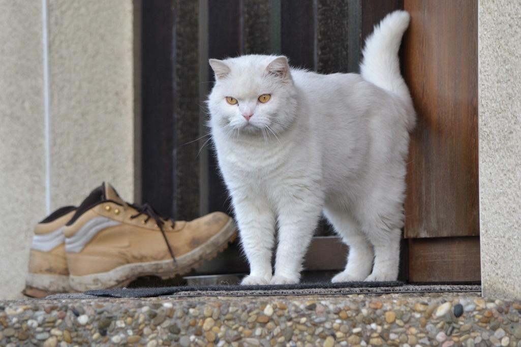 Haus Katze Mietrecht